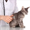Ветеринарные клиники в Агане